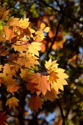 三峰神社_2012-11-10_04_.JPG