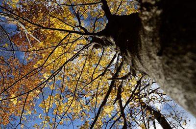 三峰神社_2012-11-10_06_.JPG