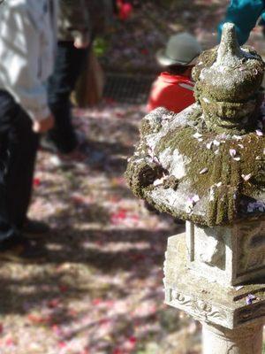 塚越 花祭り_140504_7.JPG