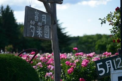 富岡芍薬園_140517_100.JPG