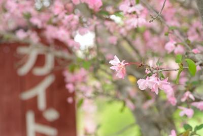 小鹿野 海棠街道_140429_10.JPG