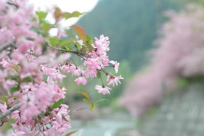 小鹿野 海棠街道_140429_17.JPG