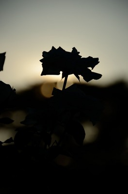 敷島バラ園 秋のバラ祭り_2012-10-08_04_.JPG