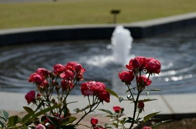 敷島バラ園 秋のバラ祭り_2012-10-13_13_.JPG