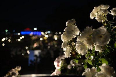 敷島バラ園_140525_42.JPG