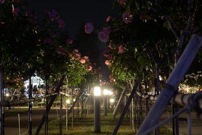 敷島バラ園_140525_48.JPG