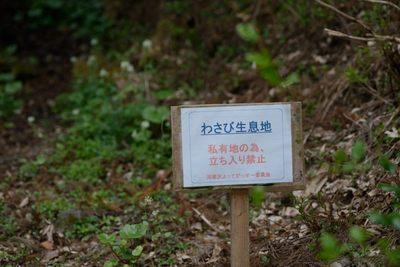秩父石楠花園_140429_42.JPG