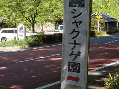 秩父石楠花園_140504_26.JPG
